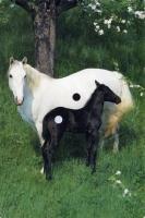 117_horse-02.jpg