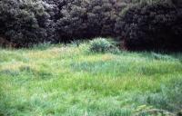173_verde.jpg
