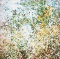 179_flowertrip.jpg