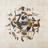 187_lizzie-buckmaster-dove1.jpg