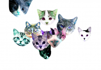 218_meowmania.png