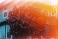 222_sarah-meadows3.jpg