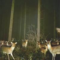 49_deer223594269.jpg