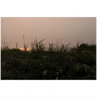 85_beachgrass.jpg