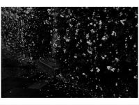 85_dutchflowers.jpg